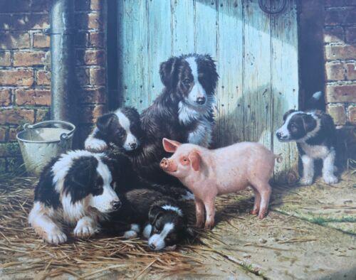 LIMITED EDITION BORDER COLLIES & PIG HAND SIGNED PRINT UK ARTIST MICHAEL JACKSON