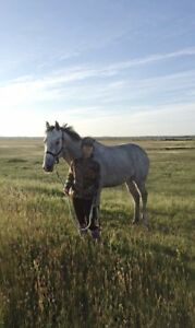 Looking for pasture board (as close to Ft Mac as possible)