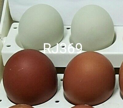1 Pure Swedish Emerald Hen Fertile Hatching Egg Exotic Rare Chicken Green Eggs