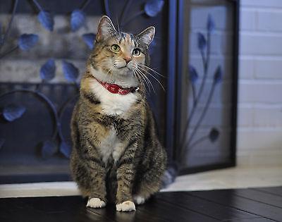 "Coastal Pet Magnetic Safe Cat Collar 12""    Free Shipping"