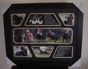 BLACK CAVIAR - LIMITED EDITION PICTURE - NEW - 22 STRAIGHT WINS Cooranbong Lake Macquarie Area Preview