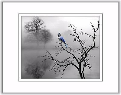 Blue Gray Bluejay Bird Home Decor Blue Jay Bedroom Bathroom B&W Photo Art Print