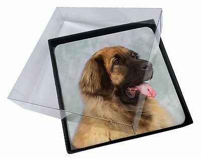 4x Blonde Leonberger Dog Picture Table Coasters Set in Gift Box, AD-LE1C