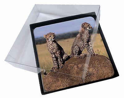 4 x Ghepardi in Guardia Foto Tavolo Set Di Sottobicchieri scatola regalo, AT-25C