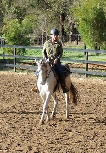 Purebred Arabian Gelding 10yrs old 15hh Albany Albany Area Preview