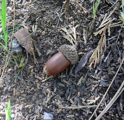 geocache container acorn stash evil tubes geocaching Rite in the Rain natural