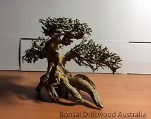 BONSAI DRIFTWOODS ARE AVAILABLE NOW Sydney City Inner Sydney Preview