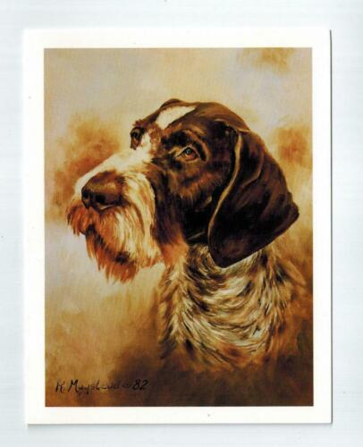 German Wirehaired Pointer Head Notecards 12 Note Cards w Envelopes Ruth Maystead