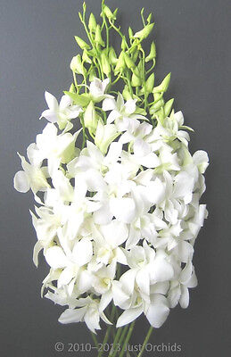 Fresh Flowers Delivery - White Dendrobium Cut Orchids