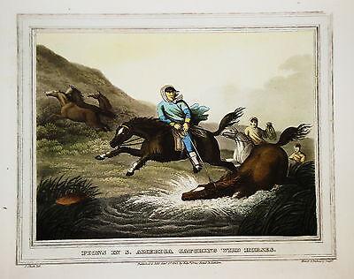 Amerika Pferdejagd Wildpferd Hors altkolorierter Kupferstich in  Aquatinta 1813