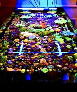 Lots of high end coral and coral Frags available