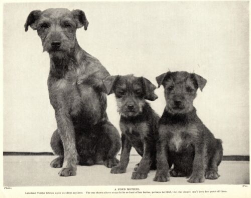 1930s Antique LAKELAND TERRIER Print Mother and Child Dog Theme 3433-JJ