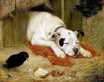 "Herbert William Weekes, American Bulldog, Terrier, Black bird, 14""x11"" Art Print"