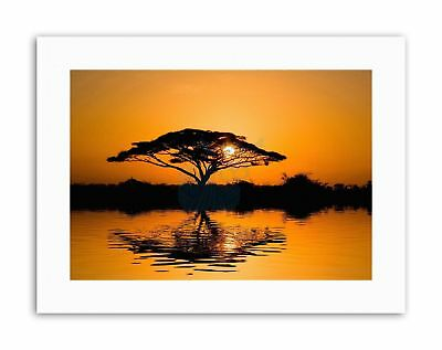 DT ACACIA TREE SUNRISE SILHOUETTE Canvas art Prints ()