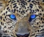 eyecatcher-24