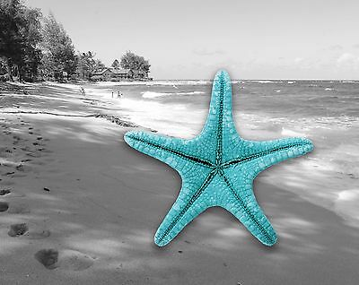 Coastal Wall Art Photo Print Teal Beach House Home Decor Starfish Ocean Sand  - Starfish Wall Art