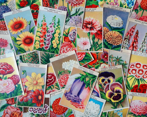 72 DIFFERENT Vintage French Flower Seed Packet Labels Genuine 1920