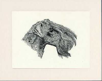 KERRY BLUE TERRIER OLD DOG HEAD STUDY PRINT FROM 1935 MOUNTED READY TO FRAME ()