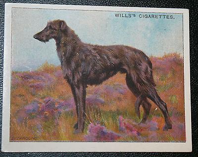 Scottish Deerhound     Original 1914 Vintage Illustrated Card  VGC