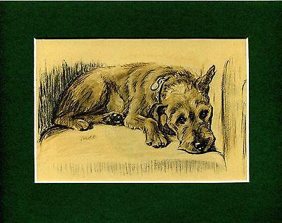Lucy Dawson ~ Welsh Terrier ~ Colour Print Genuine Vintage 1937
