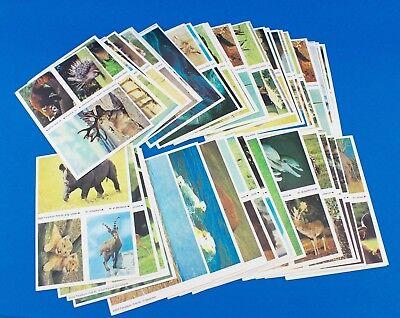 115 Stück Esso Sammelbilder aus Tieralbum Heinz Fielmann 1971 Konvolut Sammlung