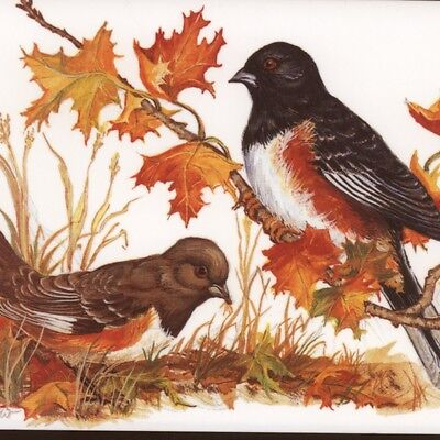 """MINT.! """"TOWHEE"""" BIRDS,MAPLE LEAVES,CORNACCHIO,BLANK,VINTAGE GREETING,NOTE CARD"""