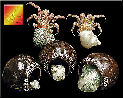 Large Hermit Crab Shelter Hermie Hut 5 6  Hermit Crab Hideout Natural Gourd