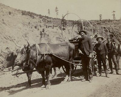 Gold Mining, Wagon Supplies pulled by Oxen, Old West, antique,1889 Photo Grabill