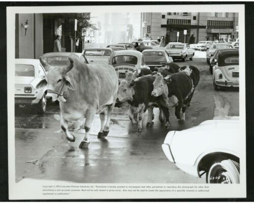 Press release photo showing cattle in New York from the Movie, For Pete