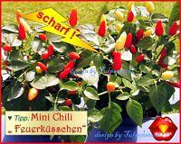 ♥ Mini Chili Feuerküsschen,scharf,Samen,kleine,Alte Sorte,Gemüse Eimsbüttel - Hamburg Schnelsen Vorschau
