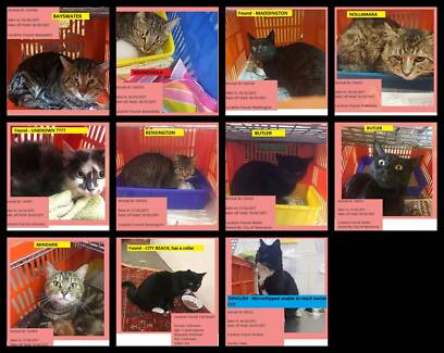 Wanted: FOUND CATS @ Cat Haven