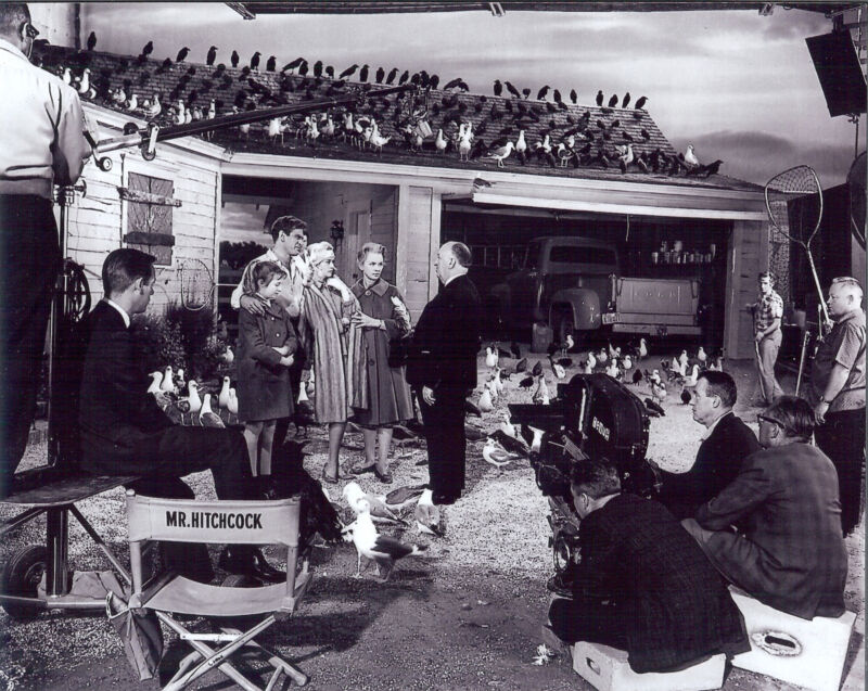 The Movie THE BIRDS  glossy 8x10 glossy photo Great scene with Hitchcock