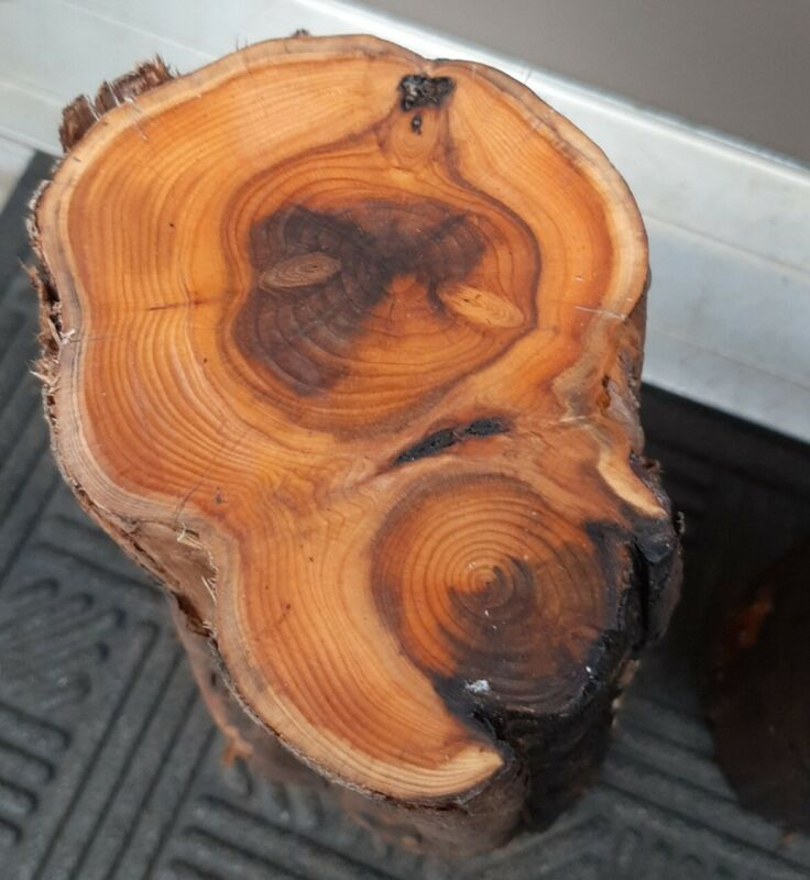 2 Pacific Yew Carving Blanks! Unique Salvaged Wood! (L305)