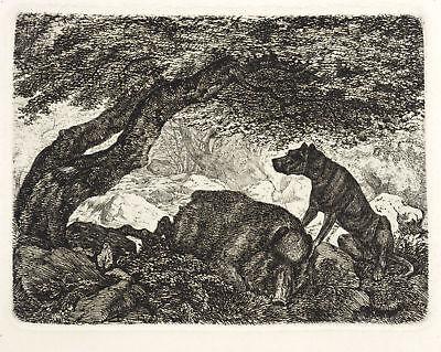 FRIEDRICH ANTON WOLFF - JAGDHUND BEI EINEM WILDSCHWEIN - Radierung 1840