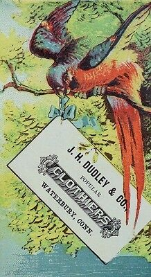 J. H Dudley & Co Clothiers Colorful Parrot In Tree Holding Letter In Beak F89
