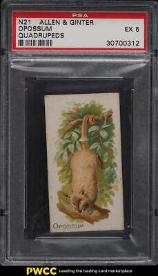 1890 N21 Allen & Ginter Quadrupeds Opossum PSA 5 EX