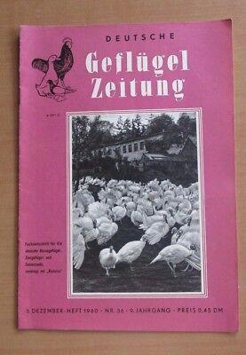 DDR Deutsche Geflügelzeitung 1960 Nr.36 Zugvögel Schnippen Houndan Geflügelschau
