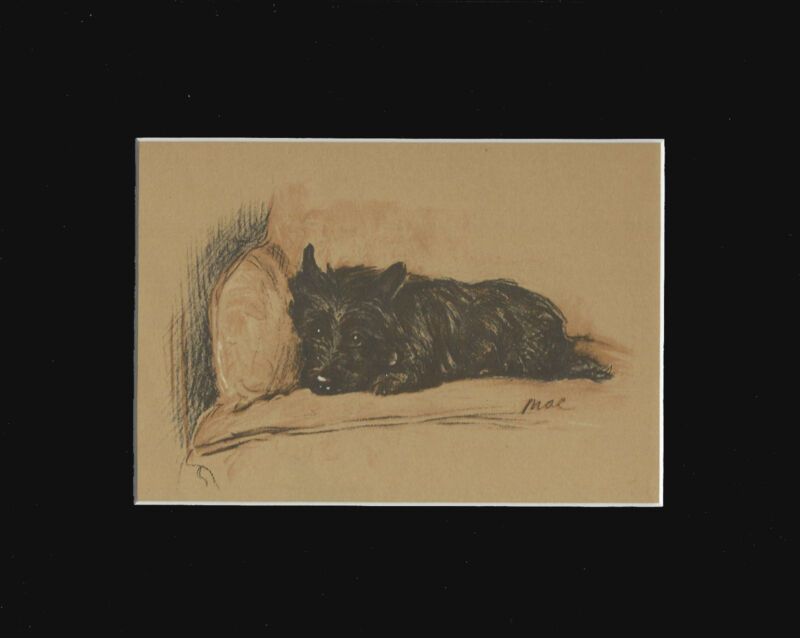 "Black Cairn Terrier Dog Sepia Print by Lucy Dawson 1937  8X10"" Matted"