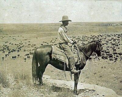 "THE TEXAS COWBOY, 1907 photo, Horse, Cattle, American, antique decor, 14""x11"""
