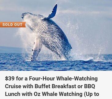 x2 Whale watching + brekki / lunch ( DARLING HARBOUR, SYDNEY) Sydney City Inner Sydney Preview