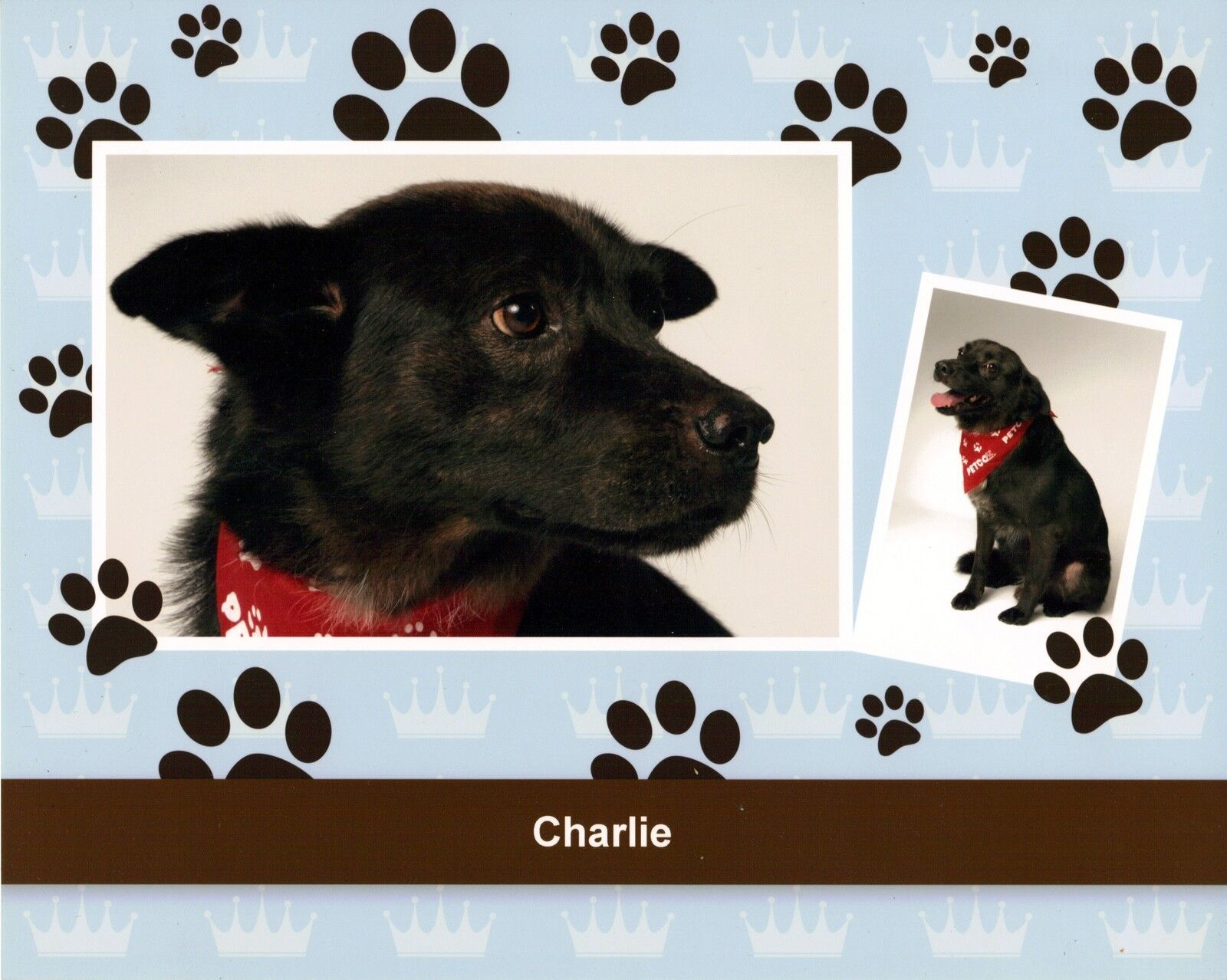 Paws 4 Charlie's Cause