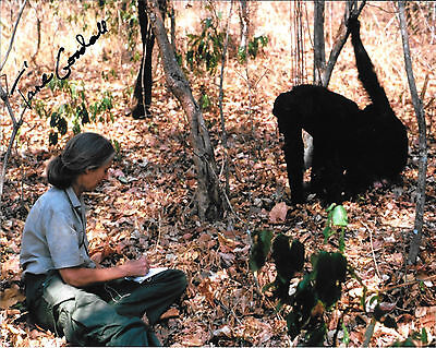 Jane Goodall Chimpanzee Anthropologist Signed 8 X 10 Photo W  Coa Chimps
