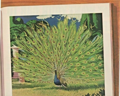 1938 Four Roses Vintage Print Ad Blend Of Whiskies Peacock Feathers