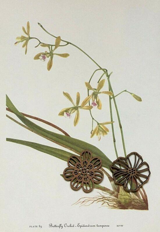 Vtg Botanic Art Print Wildflower Flora Mary Walcott PINK FLOWERS