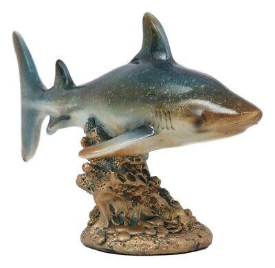 Ocean Marine Beach Coastal Predator Great White Shark Swimming Over Coral -