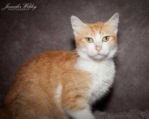 AC1009 : Christine - CAT for ADOPTION - Vet Work Included