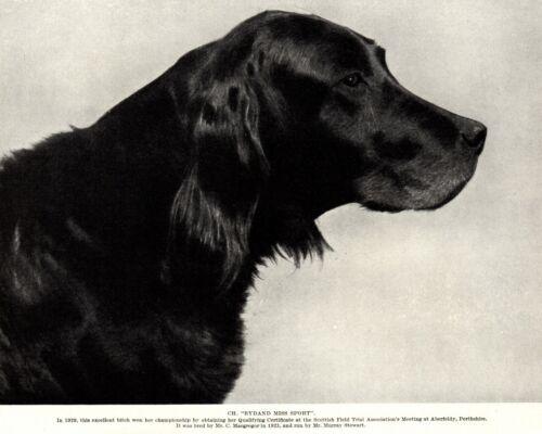 1930s Antique Gordon Setter Dog Print Champion Bydand Miss Sport 3891f
