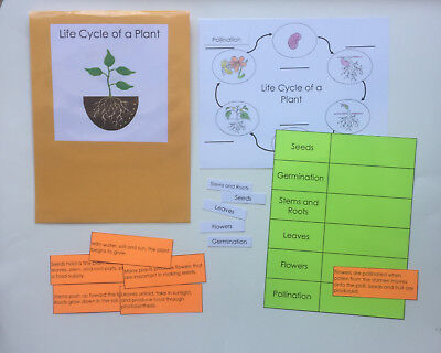 Teacher Made Science Center Learning Resource Game Life Cycle of a Plant - Lifecycle Of A Plant