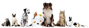 Pet Sitting Service St. John's Newfoundland image 1