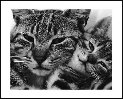 David McEnery Poppa Puss Poster Kunstdruck Bild im Alu Rahmen schwarz 40x50cm